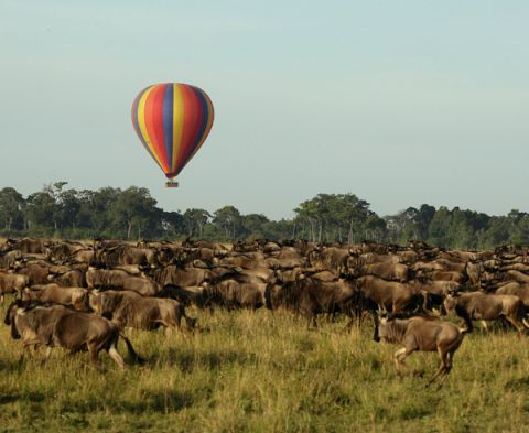 wildebeest view from balloon.jpg
